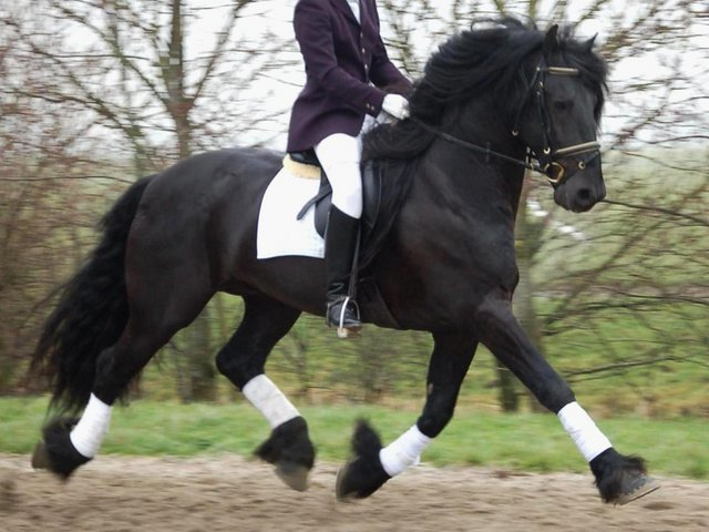 Friesian Horses Dressage