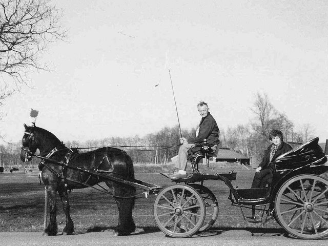 Friesian Horses History Carriage Driving